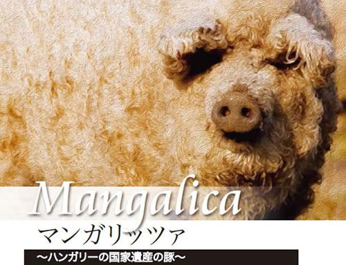 ハンガリー国家遺産の豚「マンガリッツァ」